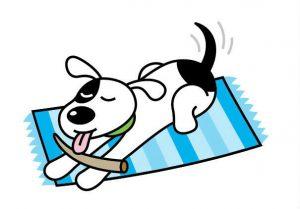 Healthy Dogma Dog Playing