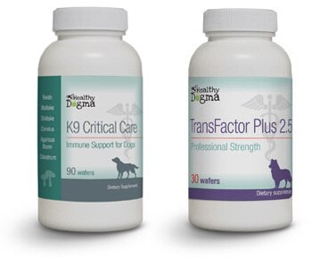 Immunotherapy for dogs